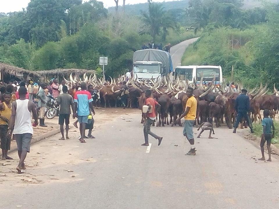 Kenge : Jusqu'où s'arrêtera la marche des éleveurs venus de l'Est ?